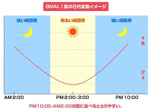 BMAL11[1]